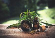 THC - czym jest, jak działa i jak wybrać nasiona konopi z wysokim poziomem THC