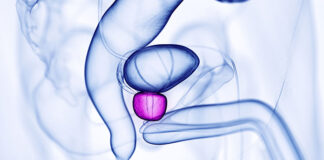 Jakie funkcje pełni prostata